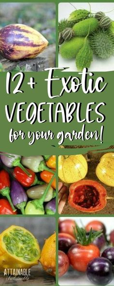 Garden Fun, Garden Crafts, Garden Ideas, Home And Garden, Container Gardening, Gardening Tips, Grow Your Own Food, Raised Garden Beds, Amazing Gardens