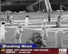 Hide your Tuna!!!!!! This late breaking news brough to you by: Archibald The Psychotic Housecats Den of Insanity