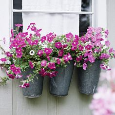 Here, colorful petunias in interesting galvanized pots have just as much impact as a many-hued combination. This planting grows best in full sun.