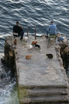 Smart cats wait for the fishermen to make a catch, for they know there will be discarded parts.