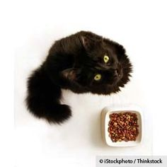 'Thiamine Deficiency in Cats' (25 Sep 2012).' This article discusses many concepts to which I strongly subscribe:    - Go home-prepared, not commercial, so *you* control the diet.  - Include at least three to five animals in your cat's menu plan.  - If you *have* to feed commercial,  rotate through several products.  - Commercial or home-prepared, don't make fish products a menu staple.