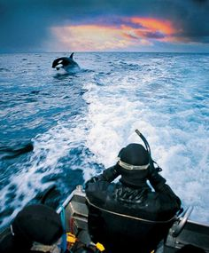 Orca in Norway: Even more reasons to visit Norway in 2015