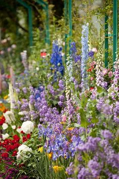 Closeup of Monet's Garden border-Complete with Foxgloves,Delphiniums,Peony-type Poppies,& a veritable meadow of colorful flowers.Courtesy of  Beautiful Flower Gardens Fun blogspot.
