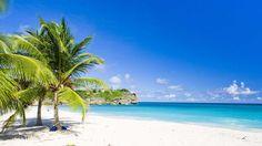 #barbados #beach #sand #travel #holiday #luxury #beachtravel #palmtree #wintersun