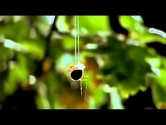 David Attenborough - Spiders Web