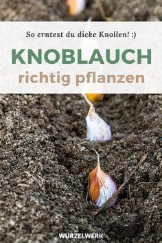 Gardening For Beginners, Gardening Tips, Dream Garden, Home And Garden, Planting Garlic, Urban Farming, Green Life, Balcony Garden, Handmade Home