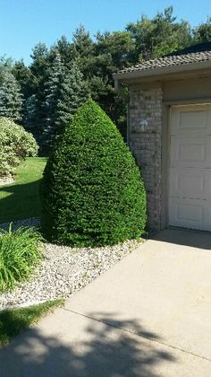 Pro-Mow Lawn Care & Landscaping, LLC | Pruning