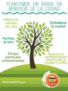 La importancia de los árboles; cuidémoslos.