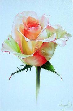 Розы - удивительные цветы...... Обсуждение на LiveInternet - Российский Сервис Онлайн-Дневников