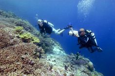 Diving Indo