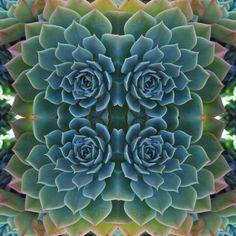 Succulent Kaleidoscope Print by keesandme on Etsy