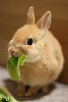 Bunny with a mouthful eyes the photographer... way too cute!!