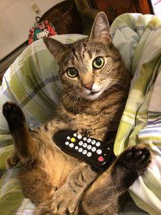 My cat doing his little sexy pose. http://ift.tt/2bmTSR2