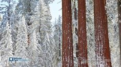 Sequoia and Kings Canyon National Parks Winter Wallpaper Digital Download