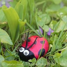 Lady Bug Stones