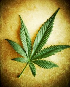 Marijuana Compound Found Superior To Drugs For Alzheimers - Cannabis and Memory, good to know.