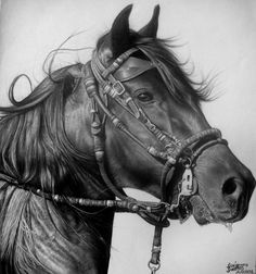 Cavalo  by ~diogenesdantas  Traditional Art / Drawings / Animals