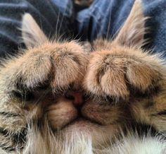 Is it Caturday Yet? Cat memes - kitty cat humor funny joke gato chat captions feline laugh photo
