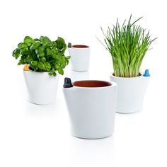 With these Self-Watering Flower Pots, your plants don't have to suffer anymore!