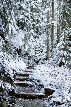 New Year Day - near Granite Falls, Washington.