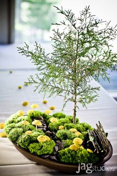 Central Park table piece - A take on Central Park – green trick dianthus, yellow button mums, juniper, river stones and water, with a bench made from flower stems. Created by Datura: a Modern Garden.