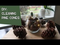 How to Clean And Prepare Pine Cones - Tabea Pine Cone Art, Pine Cone Crafts, Pine Cones, Holiday Crafts, Holiday Fun, Holiday Recipes, Penguin Craft, Pinecone Ornaments, Pine Cone Decorations
