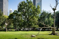 giuseppe penone's ideas in stone in madison square park NYC - designboom | architecture & design magazine