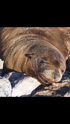 A smile from a Galápagos SeaLion is worth 1000 sunny days!