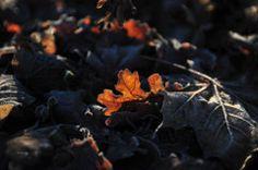 Leaves Photograph - Spotlight by Randi Grace Nilsberg