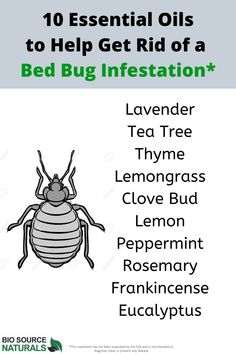 Essential oils that can help with those pesky bed bugs. You can use entirely natural methods to rid your living quarters and your belongings of bed bugs. Bed Bugs Essential Oils, Essential Oil Blends, Rid Of Bed Bugs, Diy Pest Control, Bed Bug Bites, Clove Bud, Lavender Tea, Natural Health Remedies, Drying Herbs