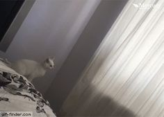"Kitten Performs Own ""Magic Trick"" 