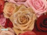 glittered_roses.jpg