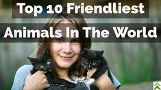 Top 10 Friendliest Animals In The World