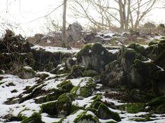 https://flic.kr/p/EFR1sE | Rocas, musgo madera y nieve en Gorriti (Navarra).