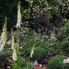 In the garden - in a few months