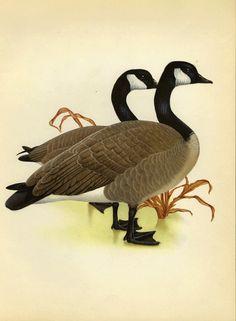 Canada Goose jackets replica 2016 - canada goose - Google Search | Canada Geese | Pinterest | Canada ...