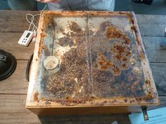 A rare look into the hive of native Stingless bees. Stingless Bees, Bee Farm, Australian Animals, Save The Bees, Bee Keeping, Beautiful Birds, Livestock, Serendipity, Reptiles