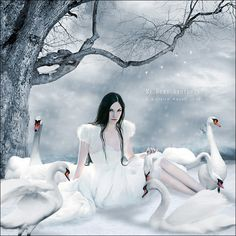 The Wild Swans.  Swans are sacred to the Goddess Bridget and in Celtic traditon are symbolic of Royalty, Nobility and Death, swans and swan maidens are messangers between the world of rhe Living and the Underworld.