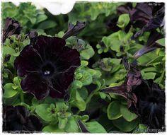 Suvikumpu: Äitienpäivänä Plant Leaves, Garden, Flowers, Plants, Garten, Florals, Gardens, Planters, Flower