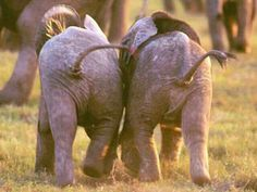 Cutest baby butts ever!