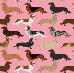So many things to make with this cute longhaired dachshund print from Petfriendly on Spoonflower!