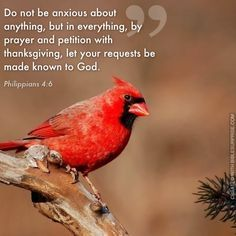 Bible Quotes About Birds. QuotesGram by @quotesgram