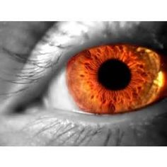 things orange - - Yahoo Image Search Results