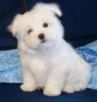 Risultati immagini per foto di cani appena nati