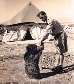 Wojtek, bear cub, who was adopted by soldiers of the 22nd Artillery Supply Company of the Polish II Corps.