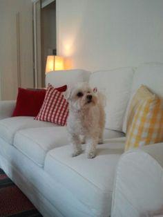 Max estrenando el sofa de su nuevo  apartamento en Lisboa