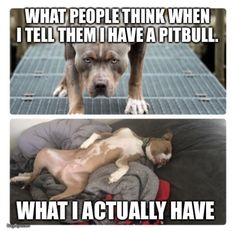 I am still looking at this and laughing. Max is on my lap on couch or against me in bed. He doesnt let me have any. Animal Jokes, Funny Animal Memes, Cute Funny Animals, Cute Baby Animals, Funny Dogs, Animals And Pets, Cute Puppies, Cute Dogs, Tier Fotos