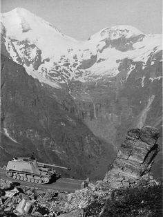 """Nashorn"" in the Alps.tim"