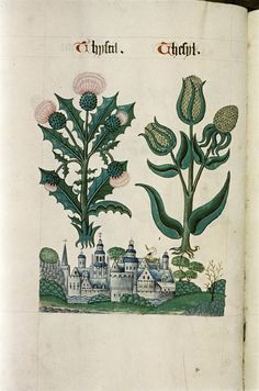 Tudor Herbal,1520 | Retronaut: