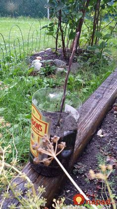 Vertical Rose Gardening How To Grow Trees From Twigs - its a simple method you can use to turn cuttings from fruit trees into new trees. Trees And Shrubs, Trees To Plant, Container Gardening, Gardening Tips, Vegetable Gardening, Mango Tree, Peach Trees, Growing Tree, Garden Trees